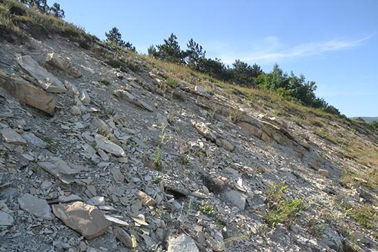 Скальная осыпь - типичное местообитание чабрецов